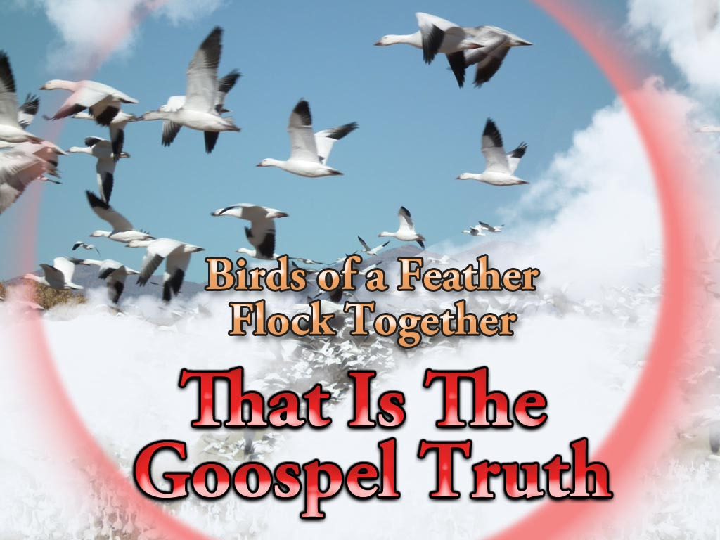 010 Essay Example On Birds Of Same Feather Flock Together Jan 18