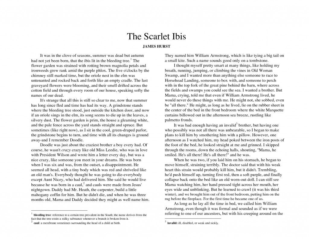 002 Essay Example The Scarlet Best Ibis Thesis Questions Discussion Large