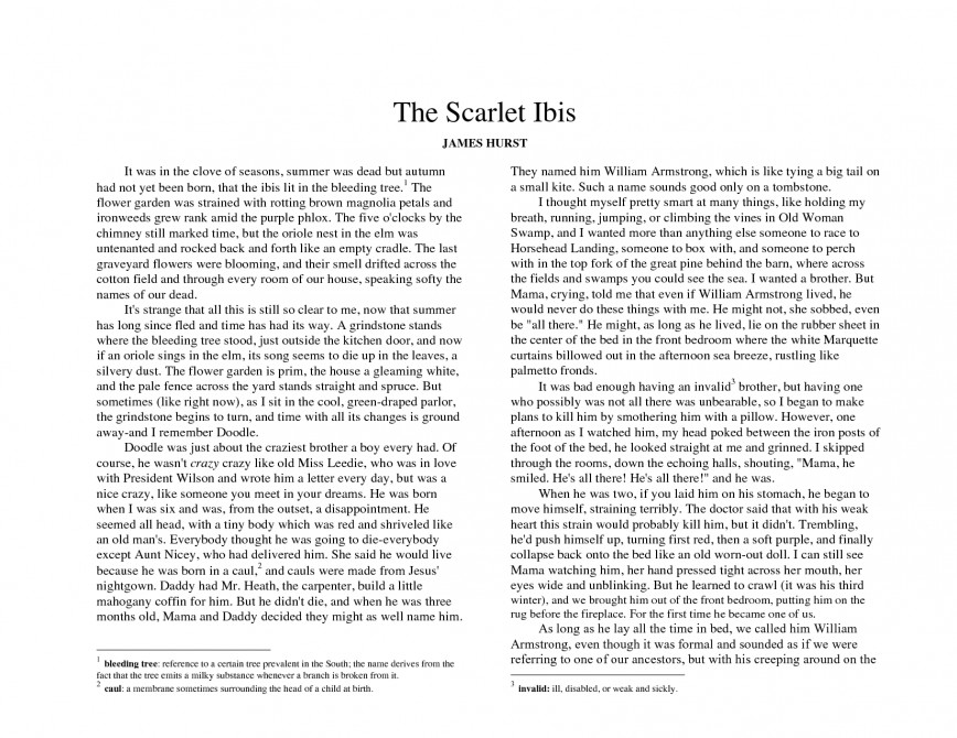 002 Essay Example The Scarlet Best Ibis On Pride Outline