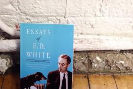 003 Essay Example Img 4919resize9002c900 Essays Of Impressive Eb White Analysis Audiobook