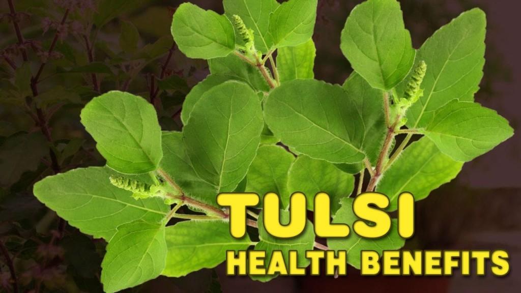 005 Essay Example Maxresdefault On Tulsi Archaicawful Plant In Hindi Marathi Kannada Large
