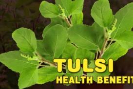 005 Essay Example Maxresdefault On Tulsi Archaicawful Plant In Hindi Marathi Kannada