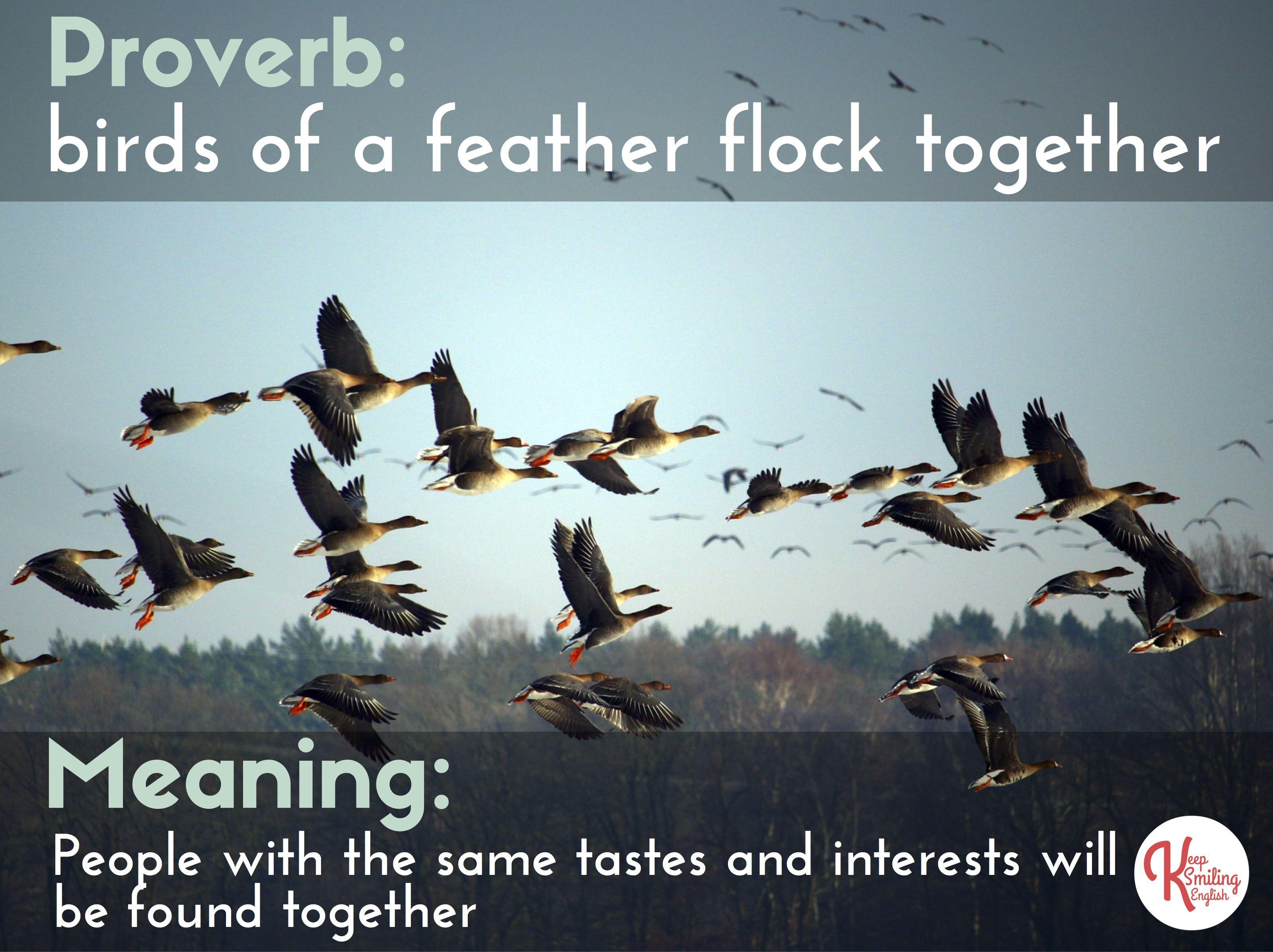 005 Essay Example On Birds Of Same Feather Flock Thatsnotus