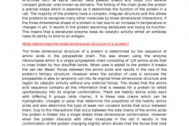 005 Essay On Respiratory Diseases Example What Determines The Three Dimensional Structure Of A Protein1444317597 Fascinating