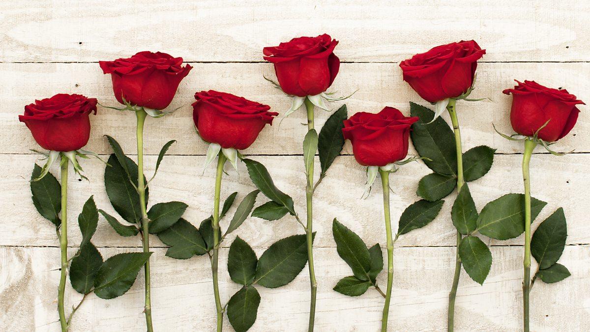 008 essay of rose flower example ~ thatsnotus