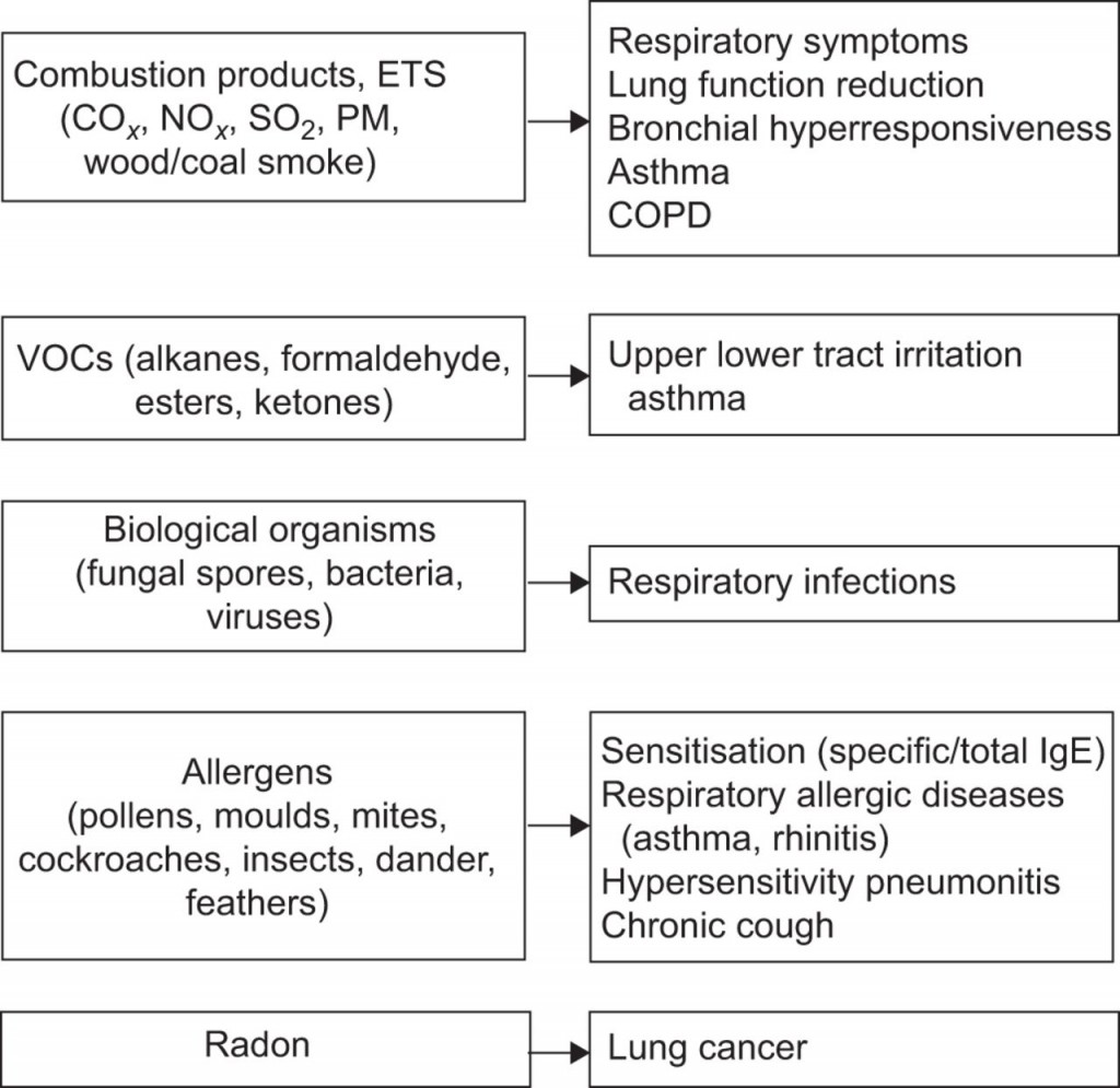 010 Essay On Respiratory Diseases Example Fascinating Large