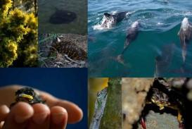 010 Montagem Biodiversity Essay Topics Phenomenal Questions