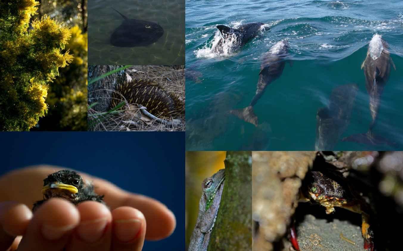 010 Montagem Biodiversity Essay Topics Phenomenal Questions Full