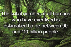 012 Cause And Effect Of Overpopulation Essay Remarkable