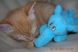 012 Essay Example Dscn1979 Jpg Pet Animal Dreaded Cat My Favorite In English Tamil