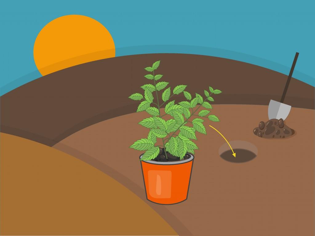 012 Essay Example On Tulsi Plant Grow Step Archaicawful In Hindi Marathi Kannada Large