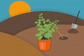 012 Essay Example On Tulsi Plant Grow Step Archaicawful In Hindi Marathi Kannada