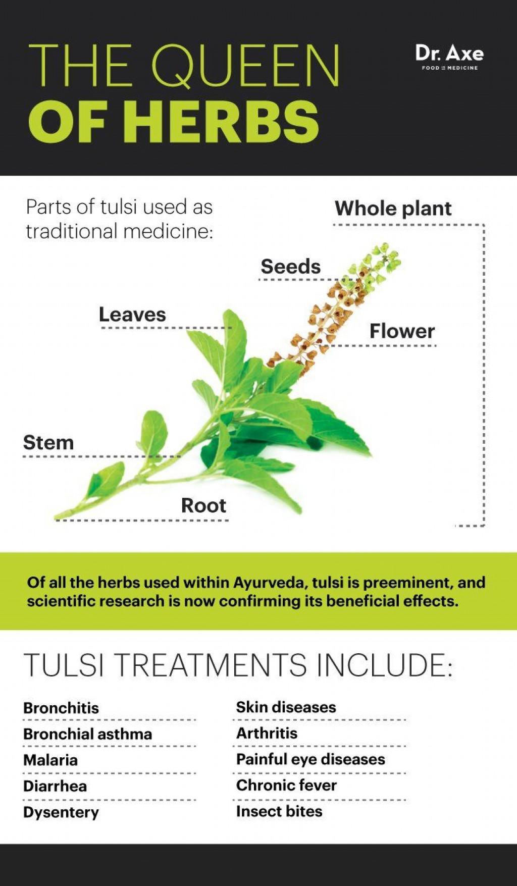 013 Essay Example On Tulsi Plant Archaicawful In Hindi Marathi Kannada Large