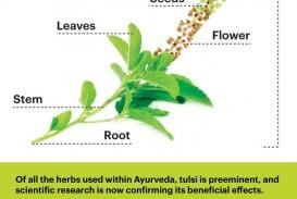 013 Essay Example On Tulsi Plant Archaicawful In Hindi Marathi Kannada