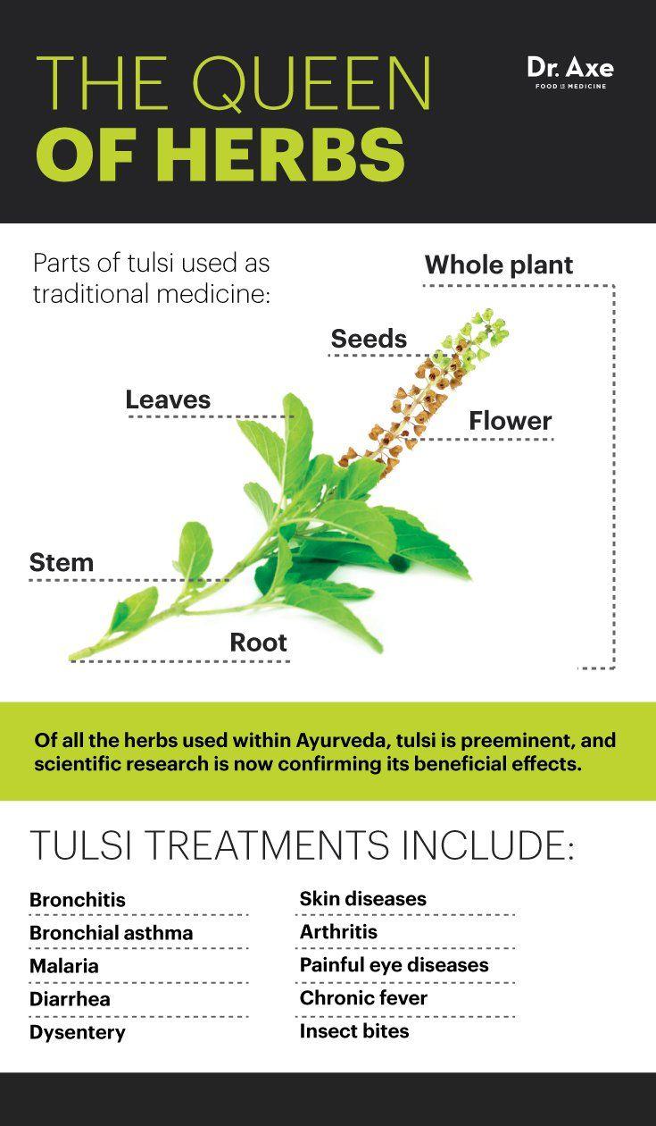 013 Essay Example On Tulsi Plant Archaicawful In Hindi Marathi Kannada Full