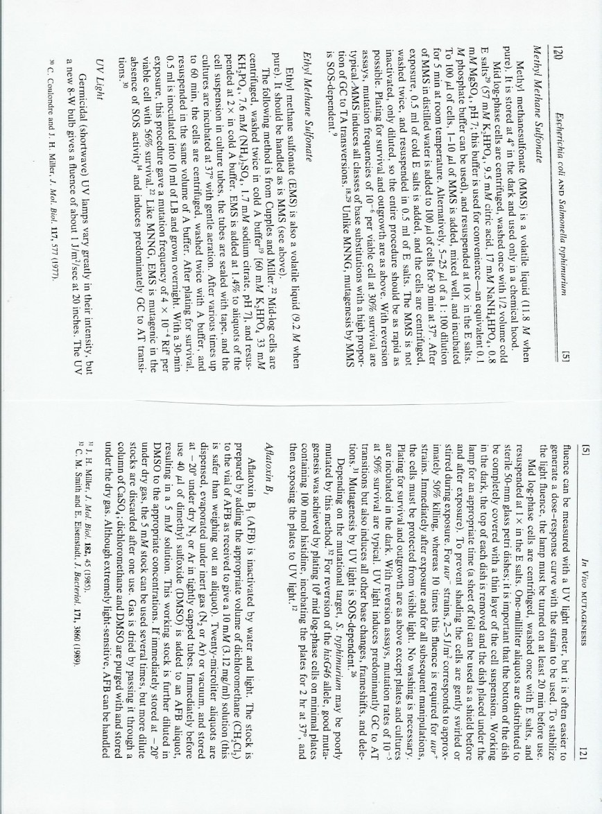 013 Essay Example Page 7 8 Awful 4 Structure On Football