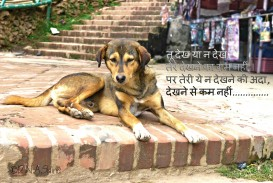 014 Essay Example On Love For Animals In Hindi Fascinating Towards And Birds 320