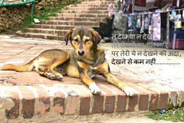 014 Essay Example On Love For Animals In Hindi Fascinating Towards And Birds 360
