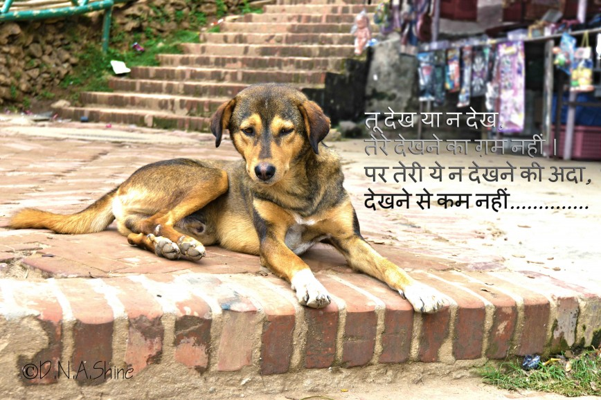 014 Essay Example On Love For Animals In Hindi Fascinating Towards And Birds 868