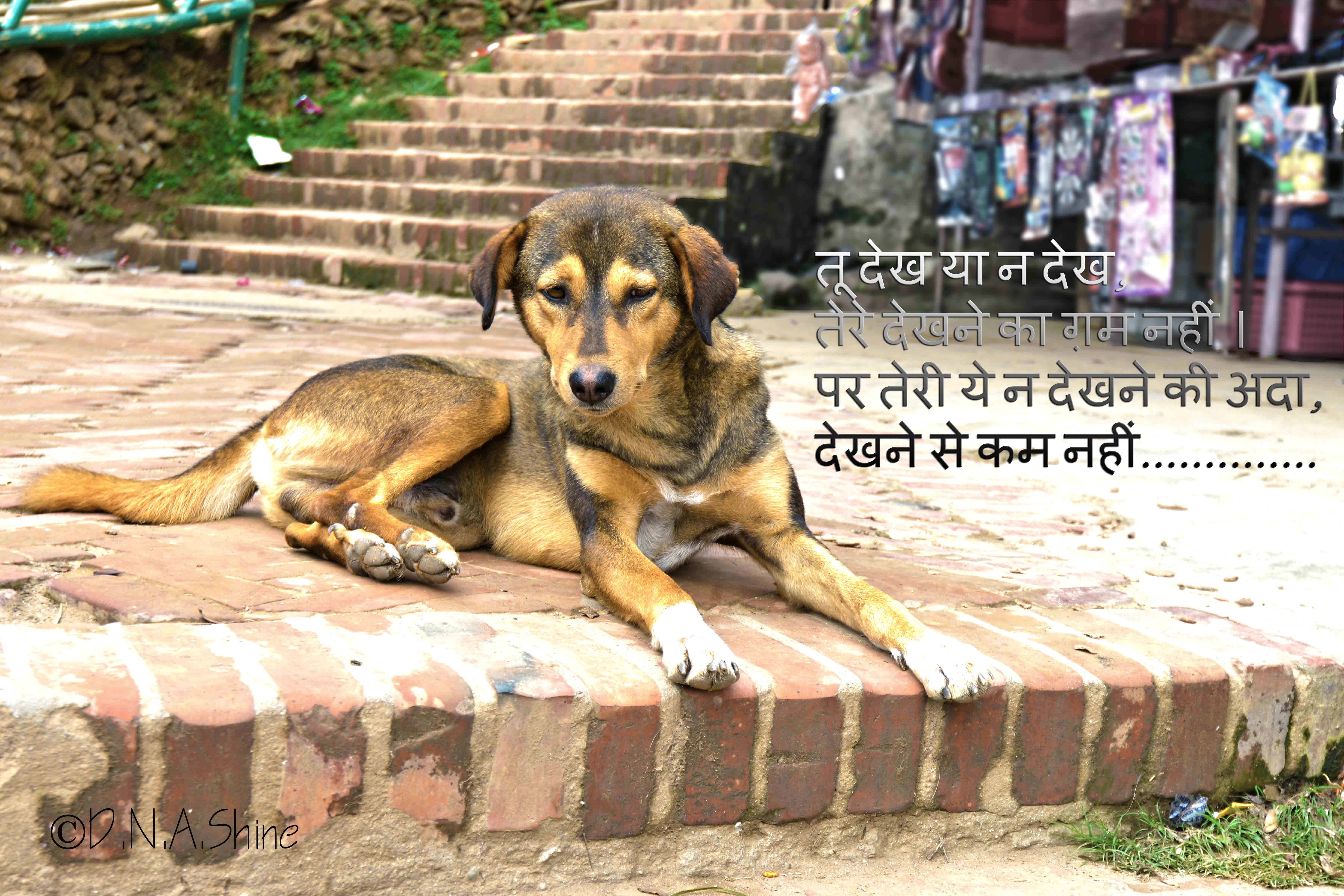 014 Essay Example On Love For Animals In Hindi Fascinating Towards And Birds