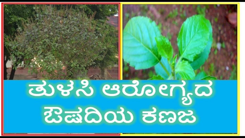 014 Maxresdefault Essay Example On Tulsi Archaicawful Plant In Hindi Marathi Kannada Large