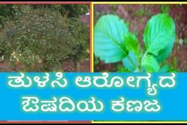 014 Maxresdefault Essay Example On Tulsi Archaicawful Plant In Hindi Marathi Kannada
