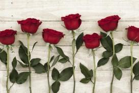 014 P047qgqf About Rose Flower Essay Unbelievable In Marathi Kannada Language