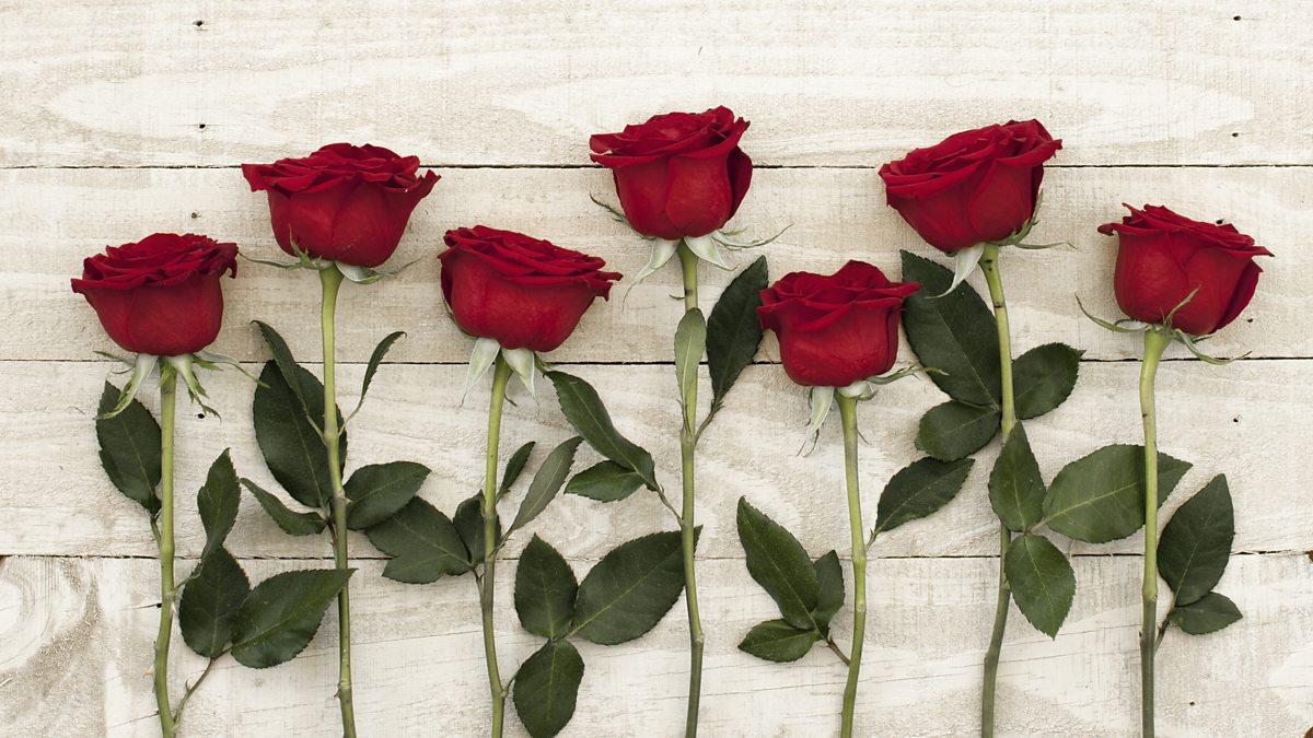 014 P047qgqf About Rose Flower Essay Unbelievable In Marathi Kannada Language Full