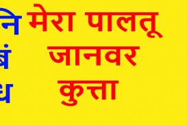 015 Dog Essay Maxresdefault Unusual 5 Lines In Hindi Red Examples