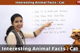 015 Pet Animal Cat Essay Maxresdefault Dreaded My Favorite In English Tamil