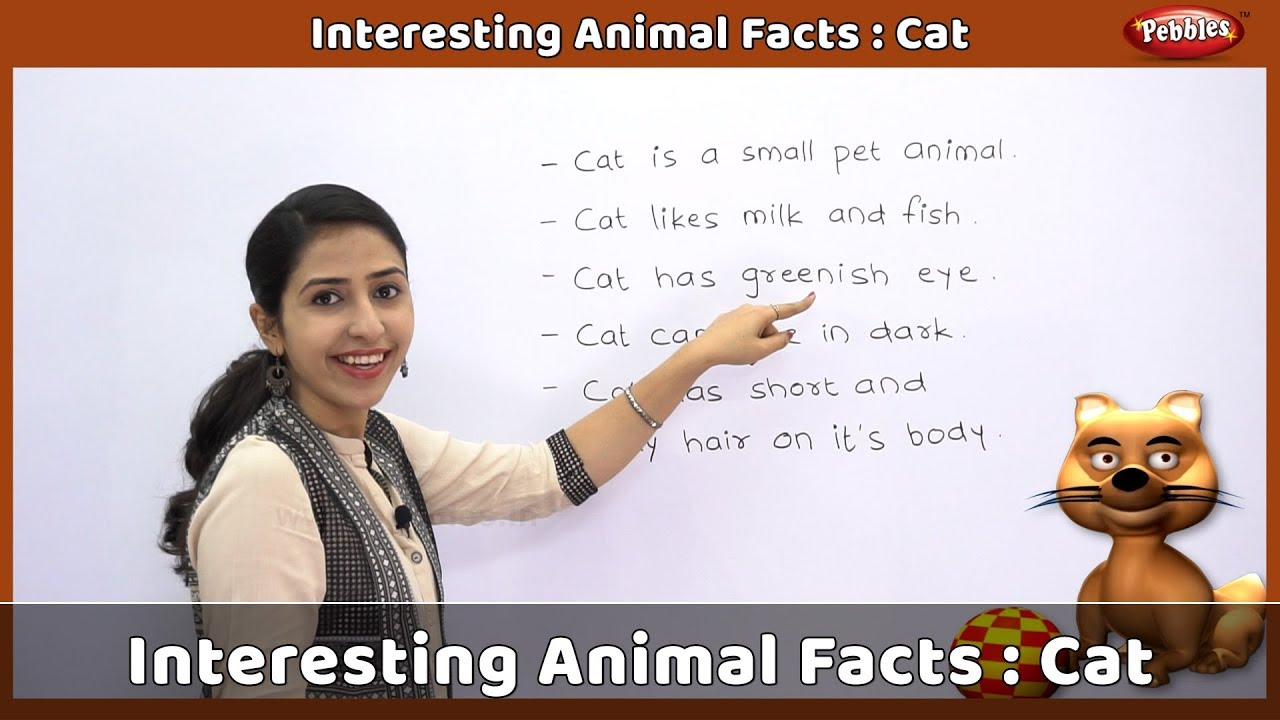 015 Pet Animal Cat Essay Maxresdefault Dreaded My Favorite In English Tamil Full