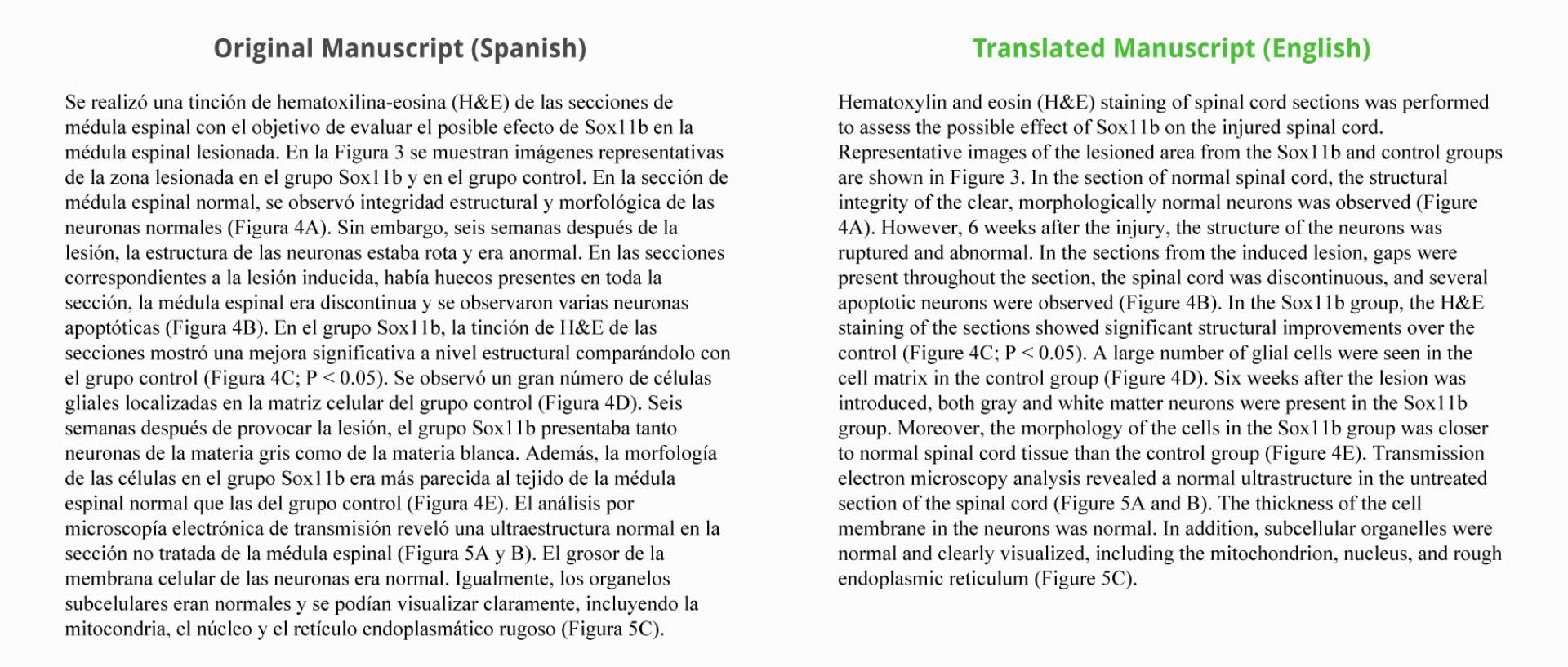 015 Translate Essay To Spanish Example Work Sample Staggering My Into What Does Mean In 1920