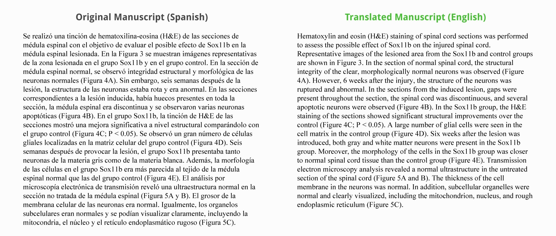 015 Translate Essay To Spanish Example Work Sample Staggering My Into What Does Mean In Full