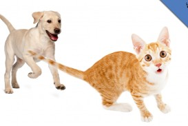 016 Essay Example Animalistnews Why Dos Chase Cats Large Thumb About Frightening Dog Dogs As Pets On Pet In Telugu Persuasive