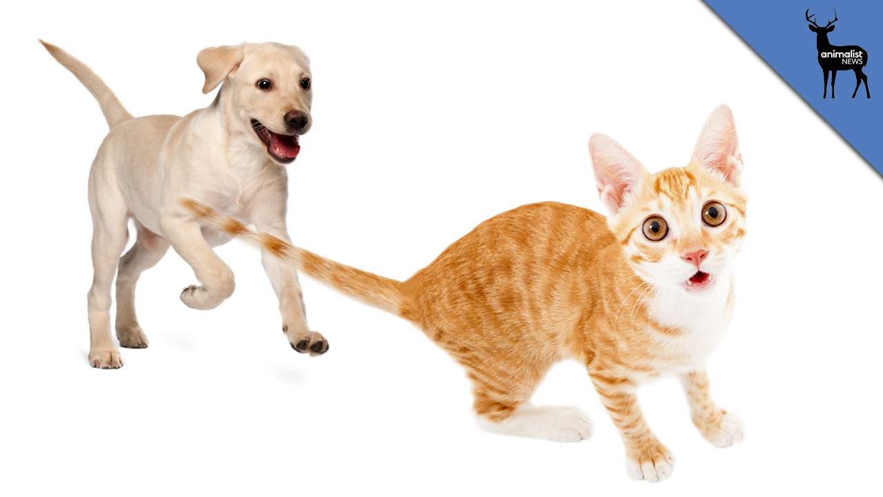 016 Essay Example Animalistnews Why Dos Chase Cats Large Thumb About Frightening Dog Dogs As Pets On Pet In Telugu Persuasive Full