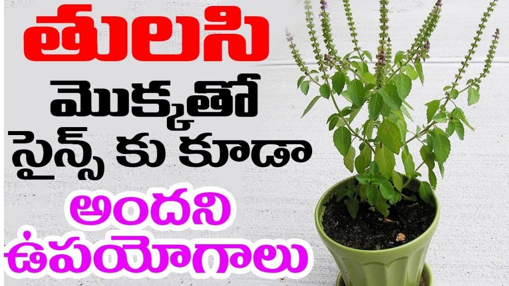 016 Essay On Tulsi Plant Example Archaicawful In Hindi Marathi Kannada Large