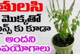 016 Essay On Tulsi Plant Example Archaicawful In Hindi Marathi Kannada