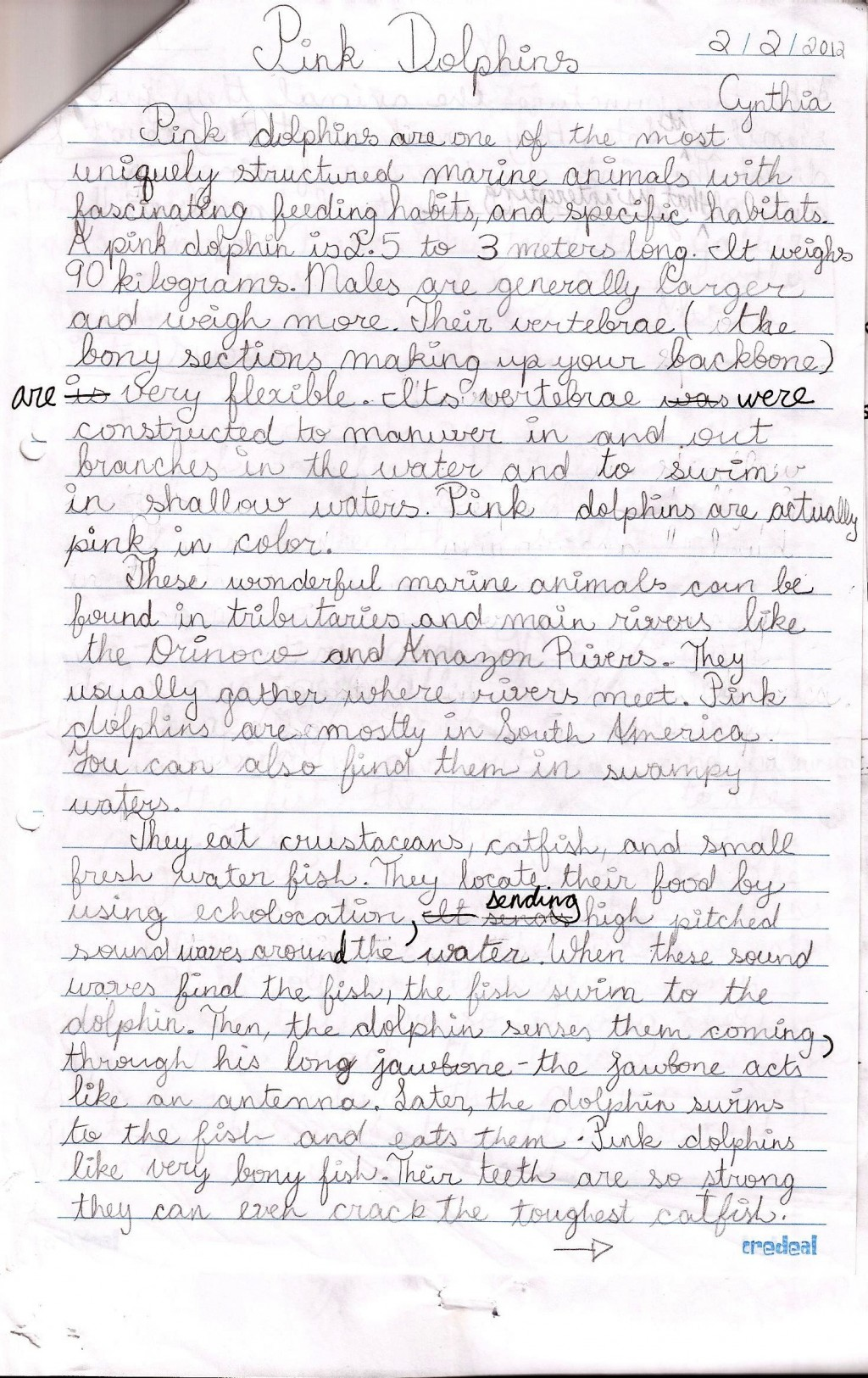 018 Persuasive Essay Rubric Example Pink Dolphins Handwritten Stunning Argumentative Grade 10 8th Doc Middle School Pdf Large