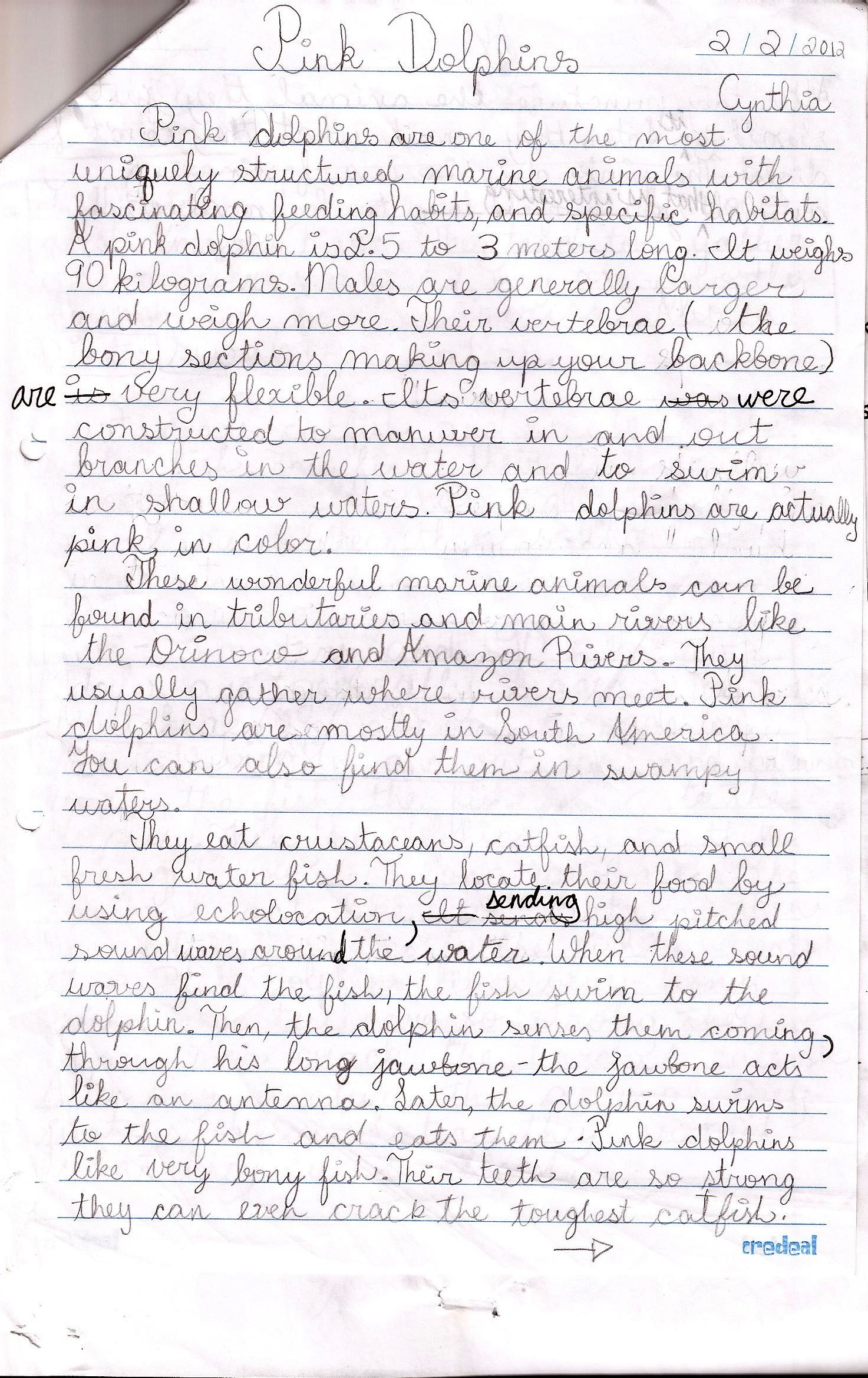 018 Persuasive Essay Rubric Example Pink Dolphins Handwritten Stunning Argumentative Grade 10 8th Doc Middle School Pdf Full