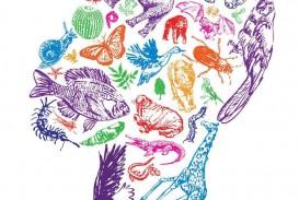 019 Essay Example Biodiversity Question Phenomenal Topics Questions