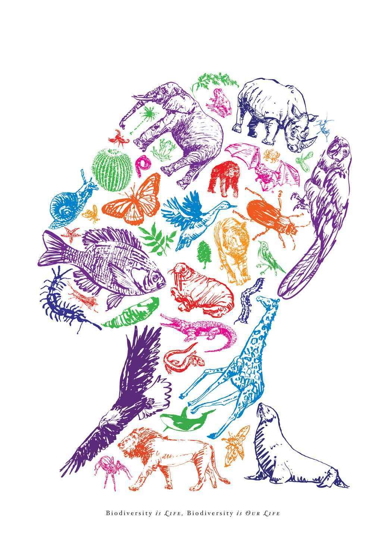 019 Essay Example Biodiversity Question Phenomenal Topics Questions Full