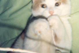 019 Pet Animal Cat Essay Example The Rintrah Upon Patrick J Keane Num Eacute Ro Writing Sca Topics Vine In Hindi My Dreaded Favorite English Tamil