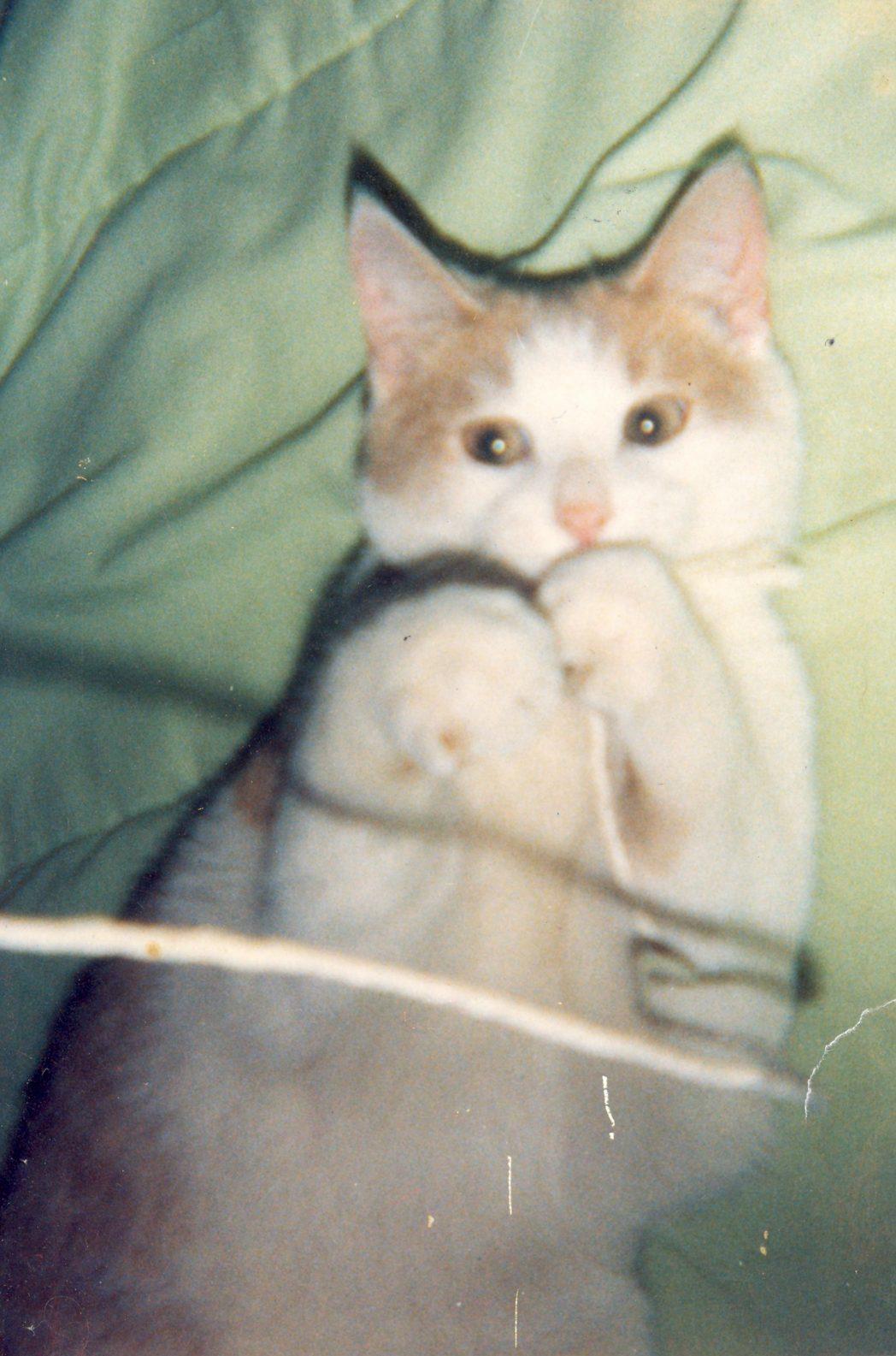 019 Pet Animal Cat Essay Example The Rintrah Upon Patrick J Keane Num Eacute Ro Writing Sca Topics Vine In Hindi My Dreaded Favorite English Tamil Full