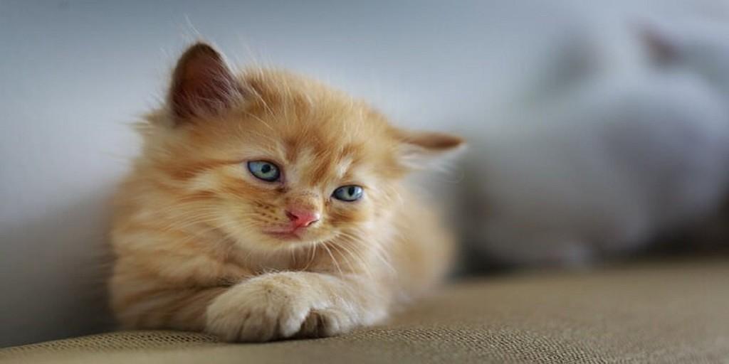 020 Pet Animal Cat Essay Dreaded My Favorite In English Tamil Large