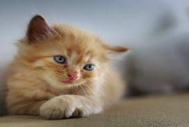 020 Pet Animal Cat Essay Dreaded My Favorite In English Tamil