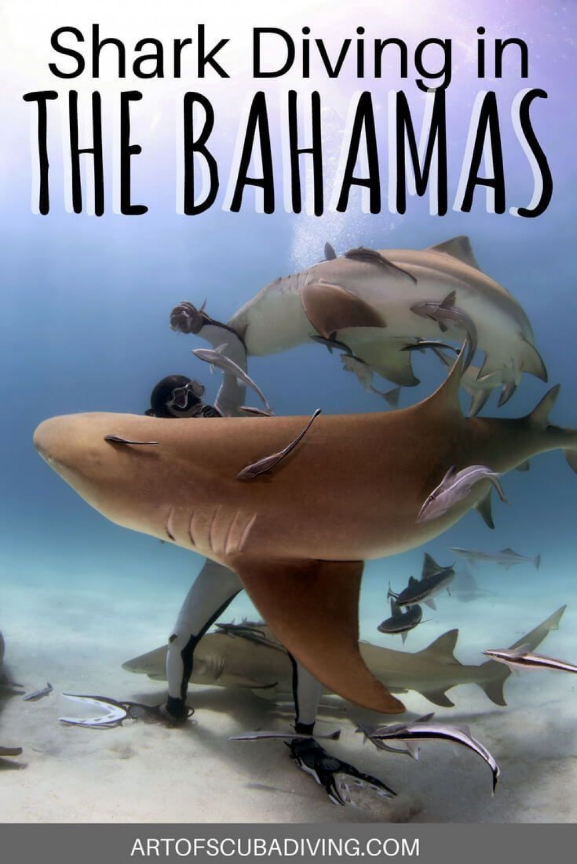 021 Essay Example Wonderful Shark Essayshark Sign Up Topics Questions Large