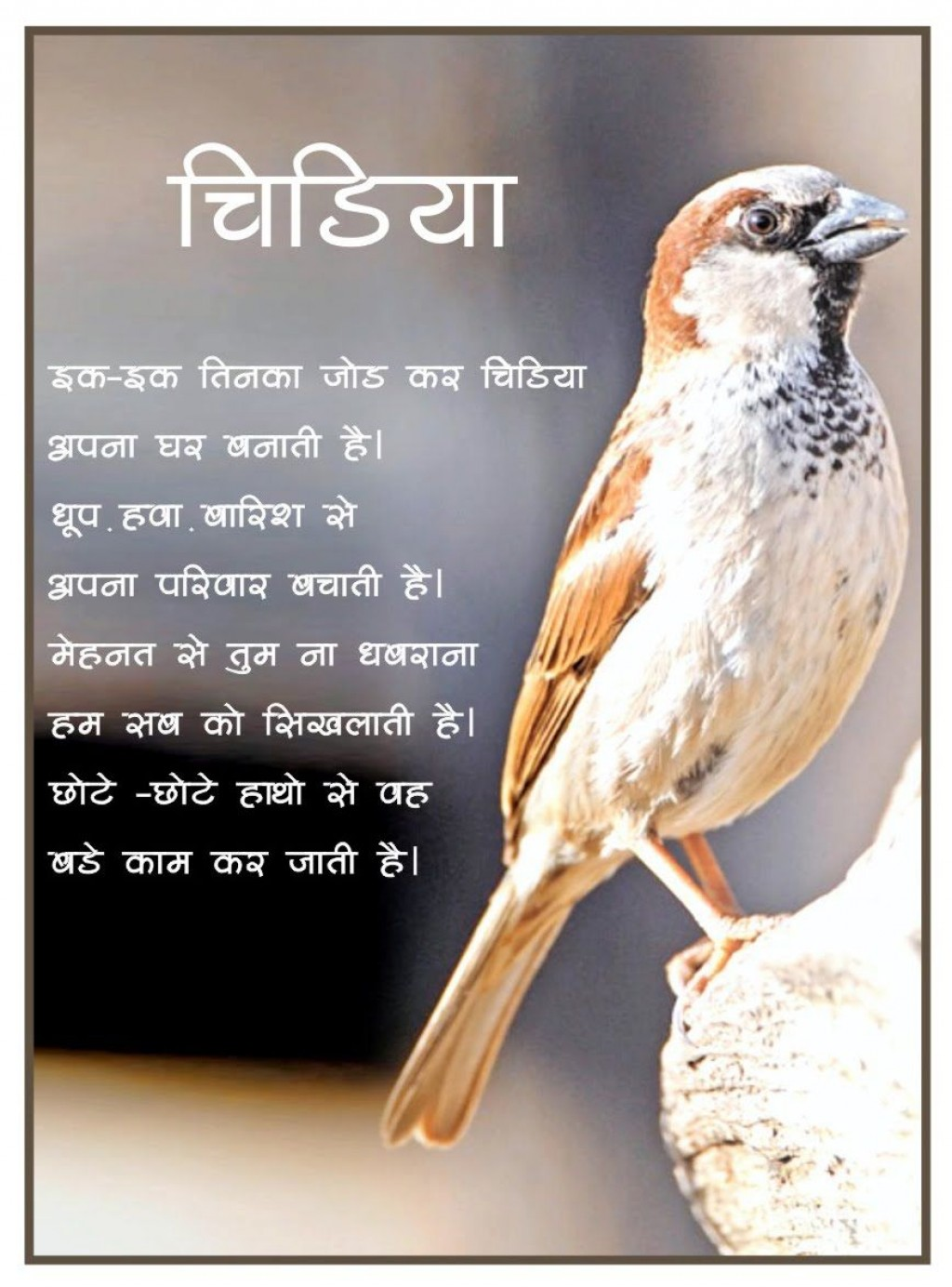 021 Essay Example On Love For Animals In Fascinating Hindi Towards And Birds Large