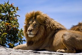 013 Short Essay On Wild Animals Example Sanskrit Quotes For