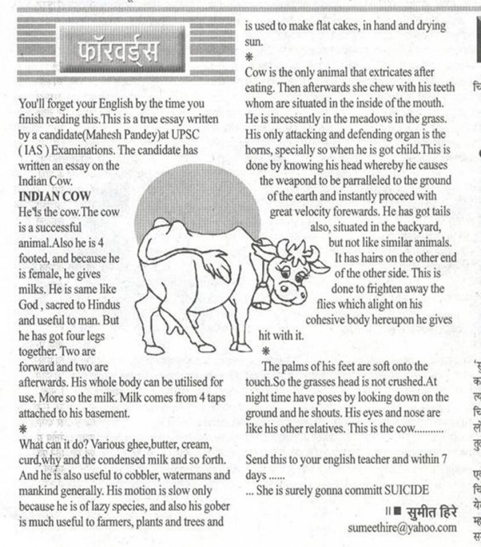 022 Essay On Love For Animals In Hindi Example Fascinating Towards And Birds 960
