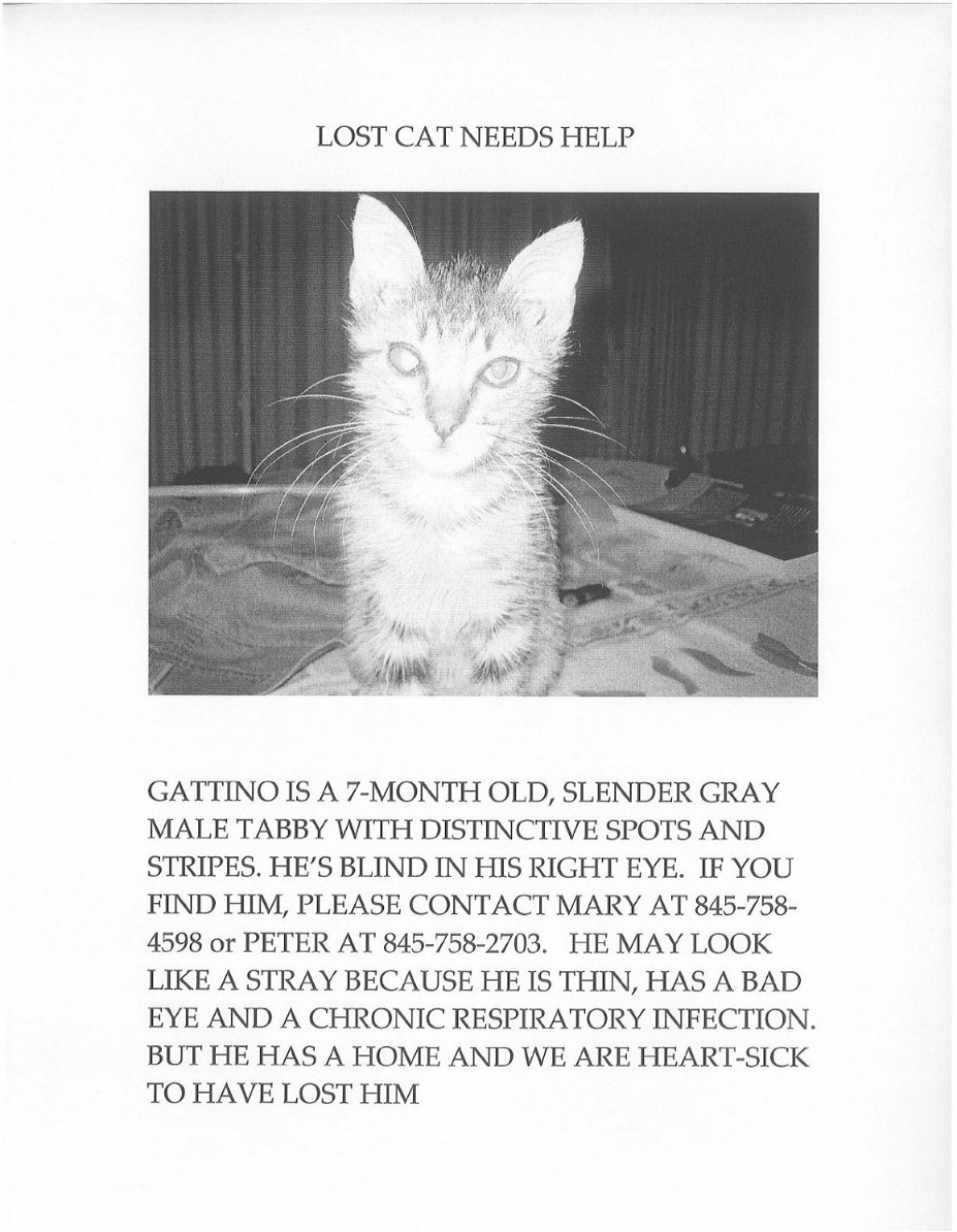 022 Mary Gaitskill Lost Cat Int Essay Example Why Should We Love Staggering Animals I Large